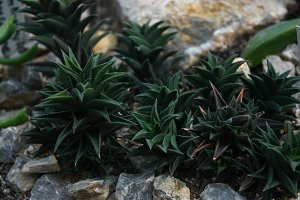 Small Succulent plants With Rocks