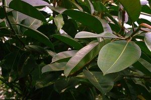 Wide Leaves Vintage Background