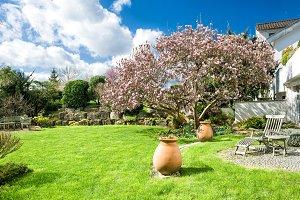 Spring garden with magnolia tree