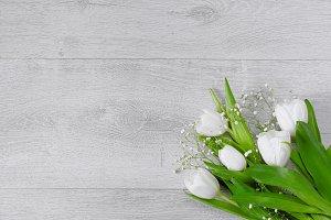White tulips on grey background