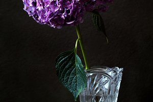 Purple flower in crystal vase