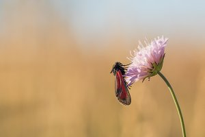 Black and Red Butterfly on a Flower