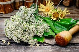 Bush medicinal plant