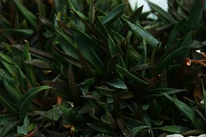 Succulent Plants Background