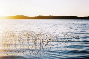Summer, lake, analog film photo