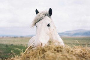A photo of a white horse