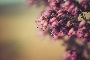 pink wild flower