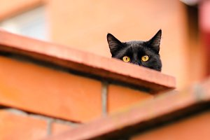 black cat peeking out from behind the wall