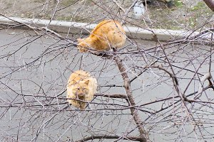 Two red cat on a spring tree