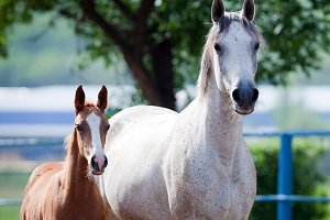 Mare and foal portrait