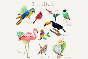 Bright color Exotic tropical birds.