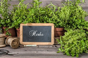 Herb garden. Healthy food