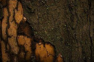 Wooden texture. Tree bark.