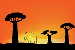 Elephant and baobabs sunset