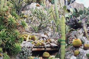Exotic Garden