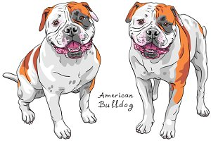 Dog American Bulldog SET