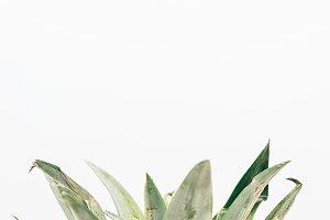 Partial Pineapple Top in Portrait