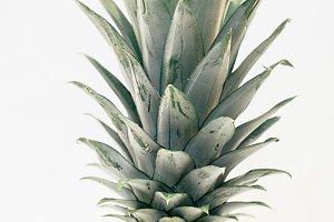 Partial Pineapple in Full Frame