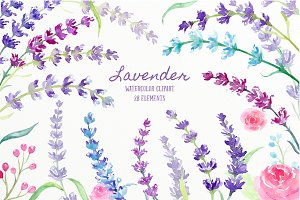 Watercolor Lavender Illustration