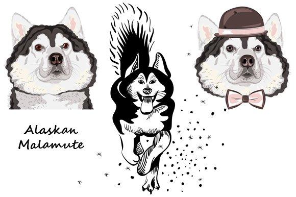 Dog Alaskan Malamute SET