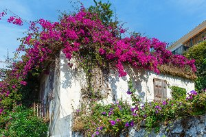 Flowering tree on the roof