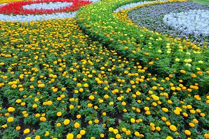 Summer colorful flowerbed