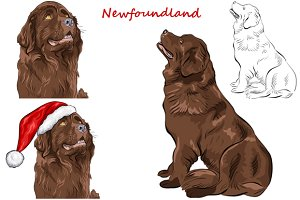 Dog Newfoundland Set