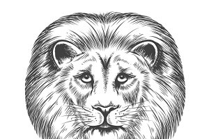 Hand Drawn Lion Head