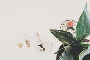Pineapple Polaroids & Plants 3