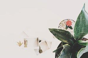 Pineapple Polaroids & Plants 2