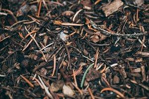 Pine Needle Ground Cover