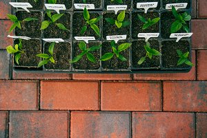 Seedlings on Brick Path