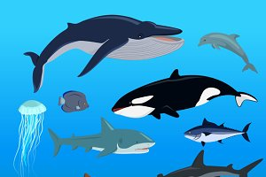 Marine Fauna Set of Aquatic Animals