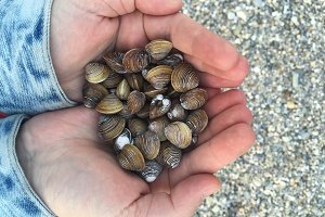 Vongole on the Beach