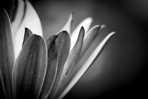 Floral background (petals)