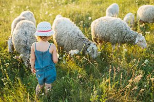 Little girl watching on sheeps