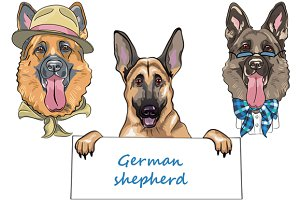 Dog German shepherd SET