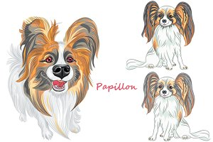 Papillon dog SET