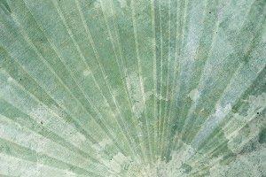 Vintage Blue/Green Palm Fan