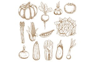 Vegetables vintage style sketches