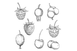 Berry fruits sketches