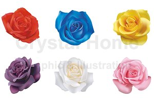 6 realistic rose icons set