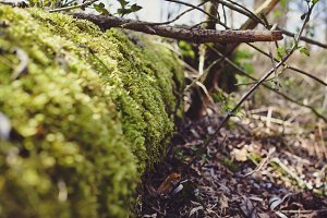 Green Moss on the Cut Tree