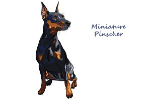 Dog Miniature Pinscher
