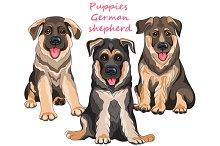 Puppies dog German shepherd SET