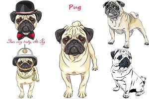 Dog Pug breed SET