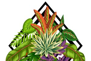 Backgrounds with tropical plants.