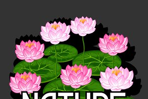 Backgrounds with lotus flowers.