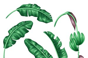 Set of stylized banana leaves.