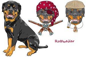 Dog Rottweiler SET